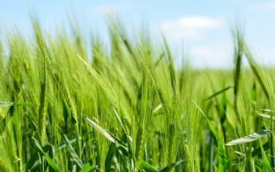 Ukrepi na področju kmetijstva in gozdarstva v Sloveniji